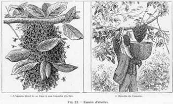L'Apiculture - Soirée thématique - 2015-05-22
